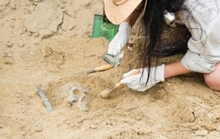 Archeologist uncovering a skull in the dirt